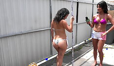 Baboons take huge balls
